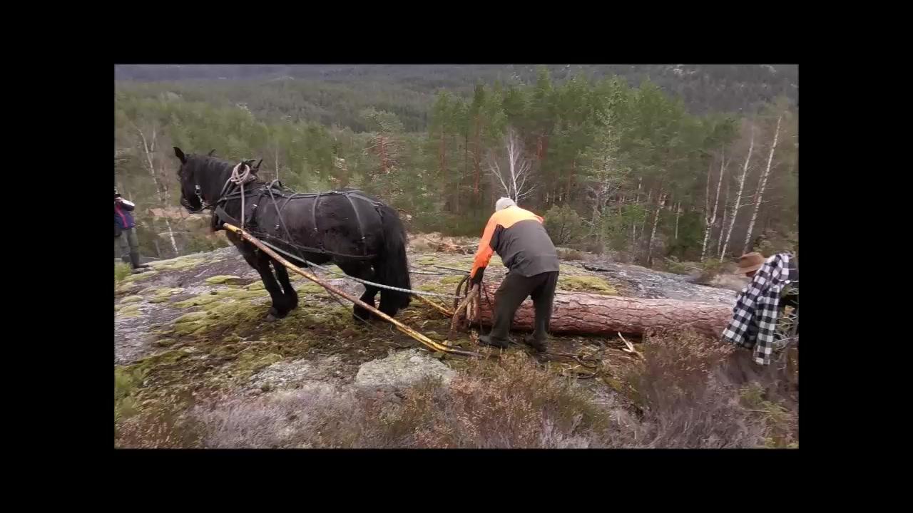 Tømmertransport